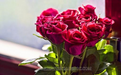 Những bông hoa tươi quà tặng ngày 20/10 ý nghĩa nhất